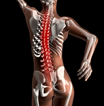human spine: 3D render of a female skeleton with spinal cord highlighted Stock Photo