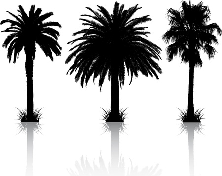 palm tree leaves: Silhouettes of 3 different palm trees with reflections