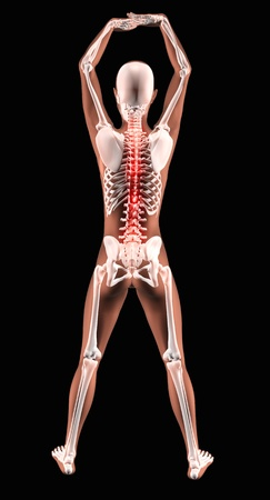 3D render of a female medical skeleton in a yoga position with spine highlighted Stock Photo - 9440523