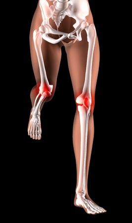 3D render of female skeleton legs running with knee joints highlighted photo