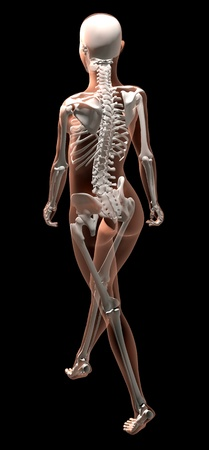 3D render of a female medical skeleton walking photo
