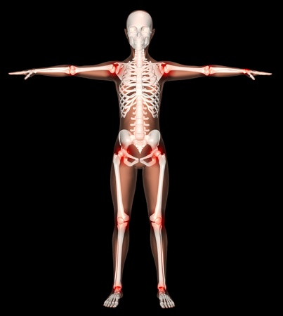 3D render of a female skeleton with main joints highlighted photo
