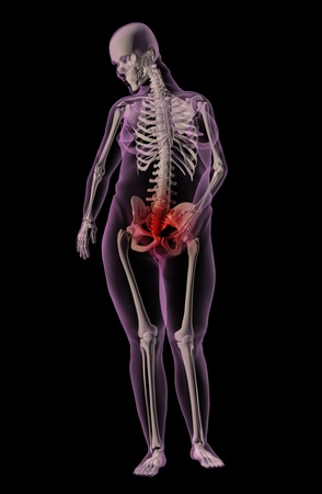 3D render of a medical skeleton of an overweight female with stomach ache photo