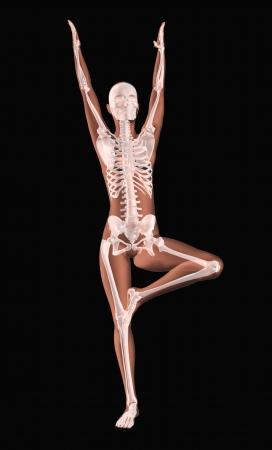 scheletro umano: 3D rendering di uno scheletro femmina medico in una posizione yoga Archivio Fotografico