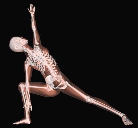 skeletons: 3D render of a female medical skeleton in a yoga position Stock Photo