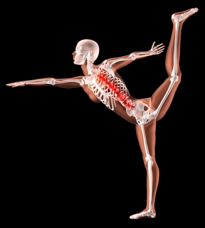 3D render of a female medical skeleton in a yoga position with spine highlighted photo