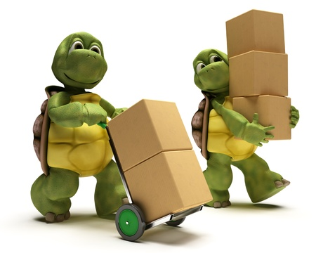 3D render of a Tortoise with boxes for shipping photo