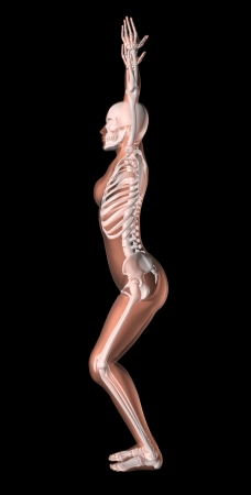 x ray skeleton: 3D render of a female medical skeleton in a yoga position Stock Photo