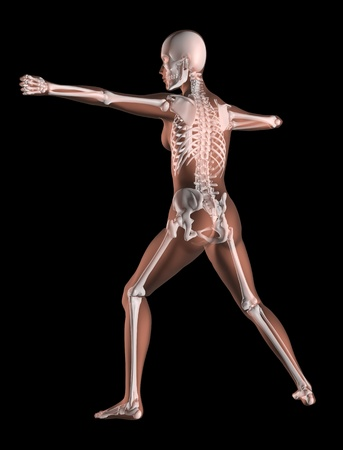 3D render of a female medical skeleton in a yoga position Stock Photo - 11190172