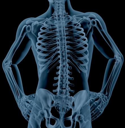 esqueleto: 3D render de un primer plano de un torso esqueleto masculino