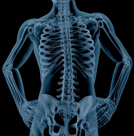 skeleton: 3D render of a close up of a male skeleton torso