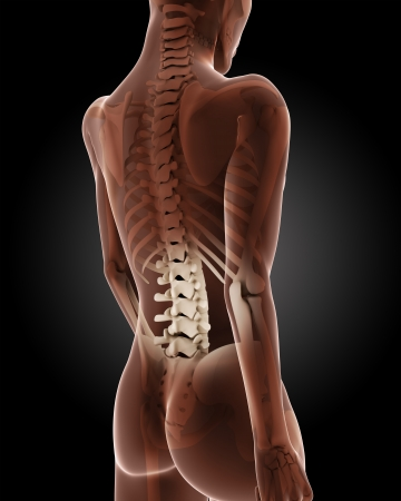 woman back pain: 3D render of a female medical skeleton with close up on back Stock Photo