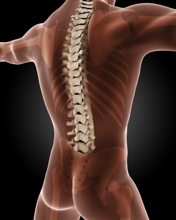 3D render of a male medical skeleton with a close up on the back Stock Photo - 20445415
