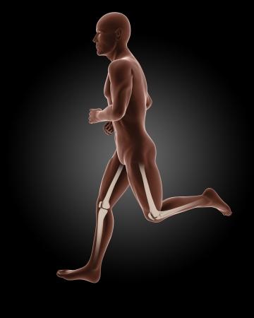 3D render of a running male medical skeleton photo