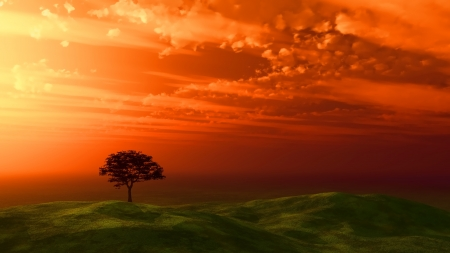 sunset sky: Tree silhouetted against a sunset sky