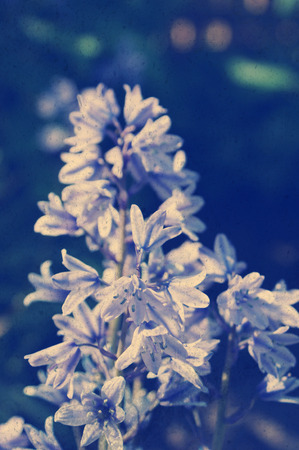 Grunge style background of bluebell flowers Stock Photo