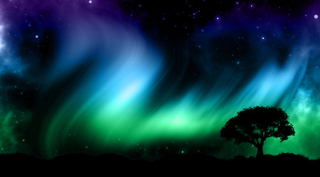 borealis: Tree silhouette against a sky with northern lights