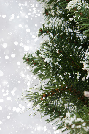 christmas tree background: Snowy branches of a Christmas tree against a bokeh lights background Stock Photo