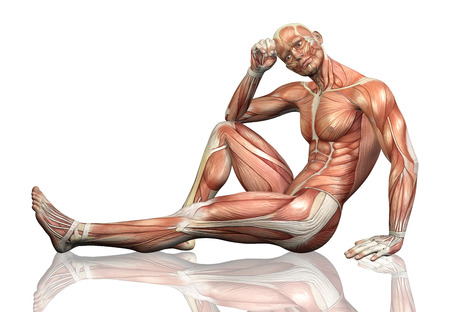 3D render of a sitting male figure with detailed muscle map