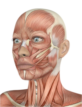 anatomy nude: 3D render of a female face with detailed muscle map Stock Photo