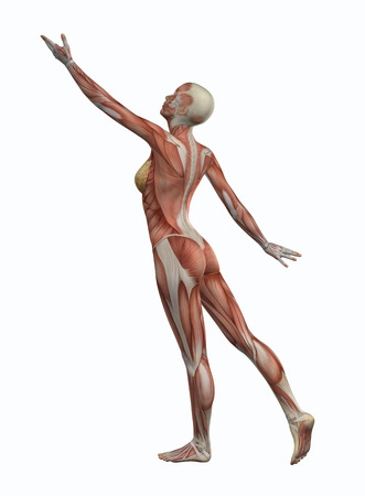 anatomy nude: 3D female figure with muscle map in reaching pose Stock Photo