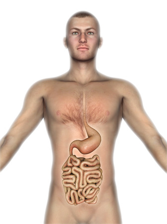 3D render of a male figure with internal organs exposed photo
