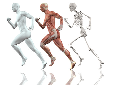 anatomy nude: 3D male figure running with skin, skeleton and muscle map Stock Photo