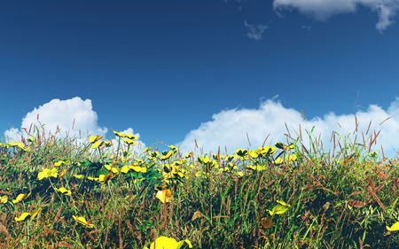 buttercups: 3D landscape with field of buttercups and grass