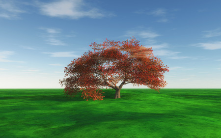 grassy: 3D render of a maple tree in a grassy landscape Stock Photo