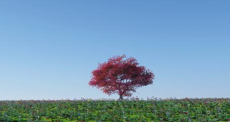 maple tree: 3d render of a maple tree in a poppy landscape Stock Photo