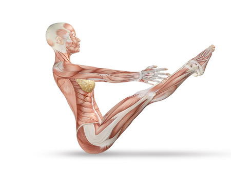 3D render of a female medical figure with skeleton in yoga pose