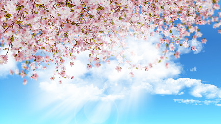 3D render of cherry blossom on a blue sunny sky
