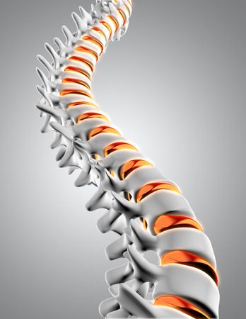 anatomy nude: 3D render of a close up of a spine with the discs highlighted