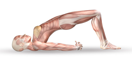 3D render of a female medical figure with muscle map in yoga position