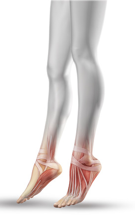 3D render of a close up of female legs with partial muscle map photo