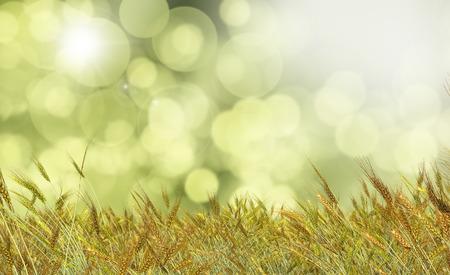 defocussed: 3D render of Golden wheat against a defocussed background