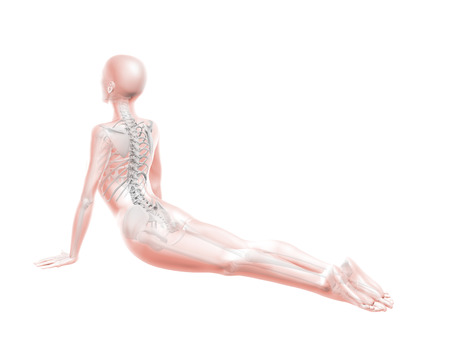anatomically: 3D render of a female medical figure with spine in yoga position