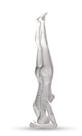 strong skeleton: 3D render of a female medical figure with spine highlighted in head stand position