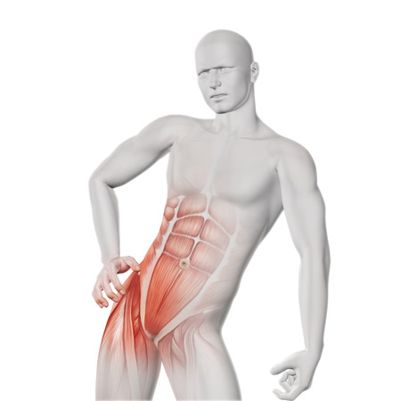hip replacement: 3D render of a male medical figure with partial muscle map Stock Photo