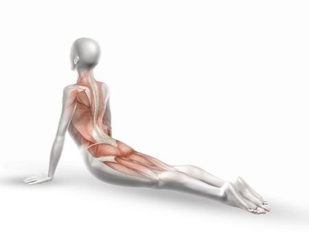 strong skeleton: Detailed illustration of a female medical figure with spine in yoga position Stock Photo