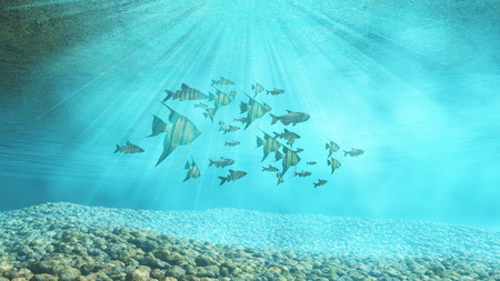 underwater: 3D render of an underwater background with shoal of fish Stock Photo