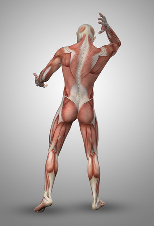 human body: 3D render of a male medical figure with muscle map
