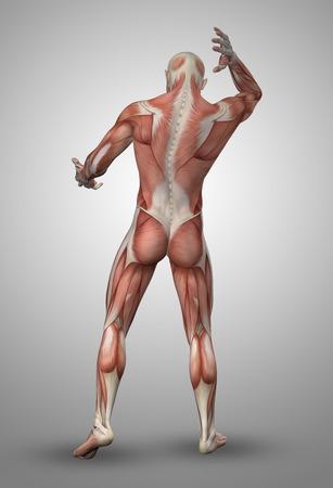 anatomia humana: 3D rinden de una figura masculina médica de Mapa muscular Foto de archivo