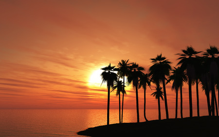peaceful background: 3D render of palm trees against a sunset sky