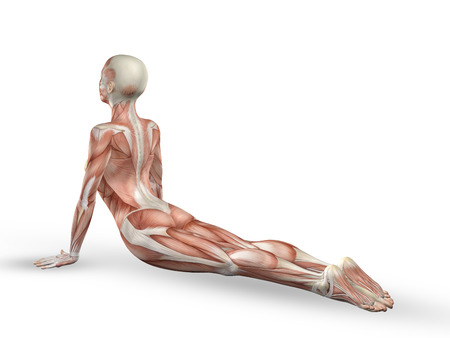 3D render of a female medical figure with spine in yoga position