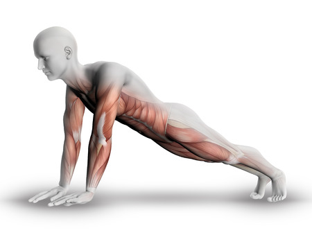 3D male medical figure with partial muscle map in yoga pose