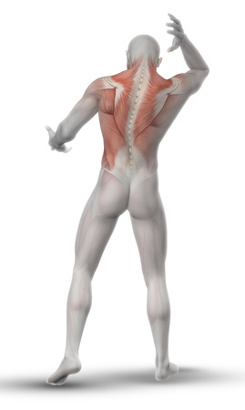 partial: 3D render of a male medical figure with partial muscle map on his back and neck