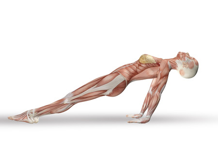 3d nude: 3D render of a female figure with spine in yoga position