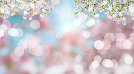 3D render of cherry blossom on a defocussed background