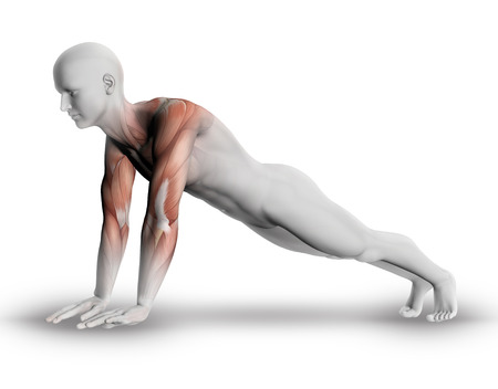 3d nude: 3D render of a male medical figure with partial muscle map in yoga pose